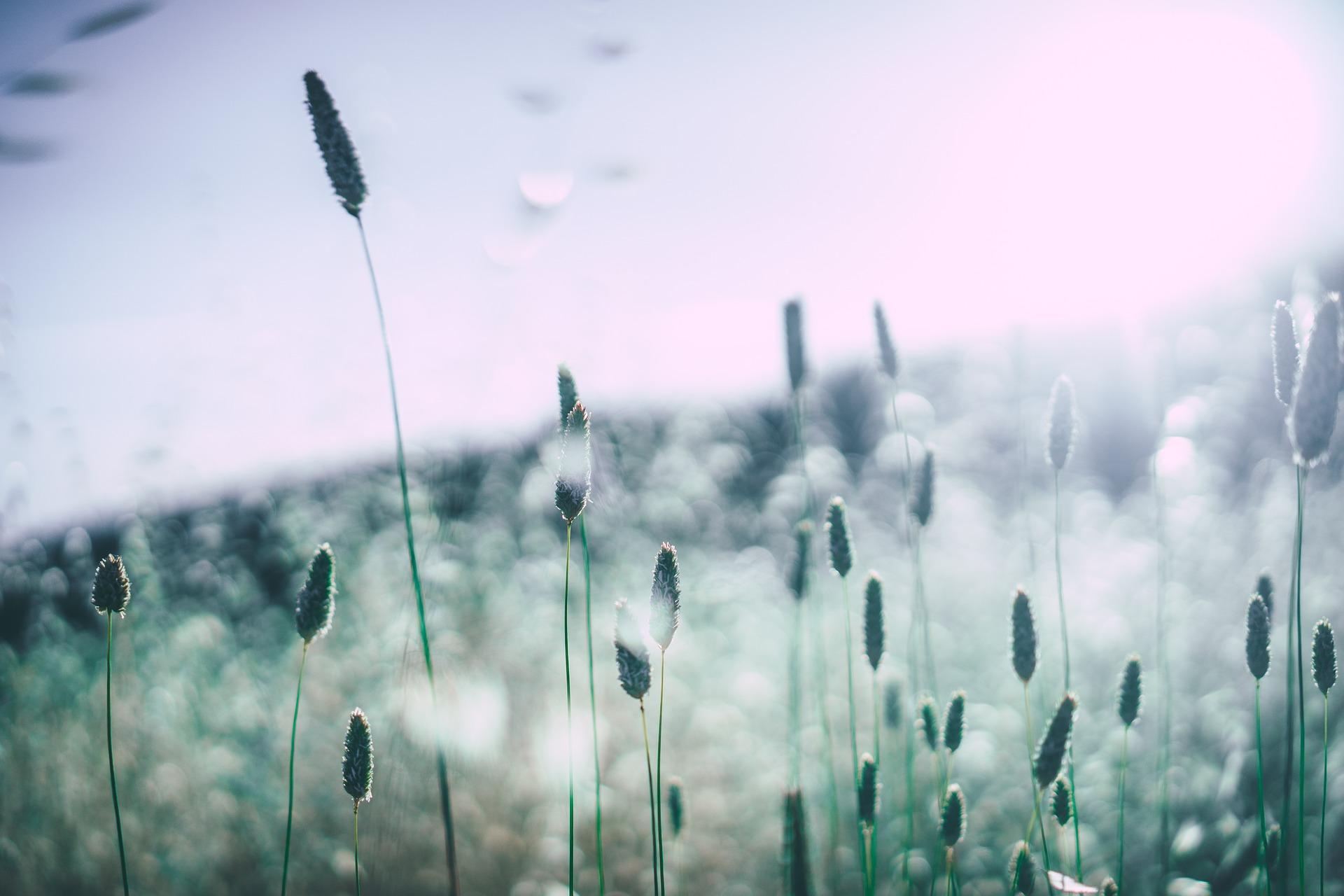 pollen, grass, allergies