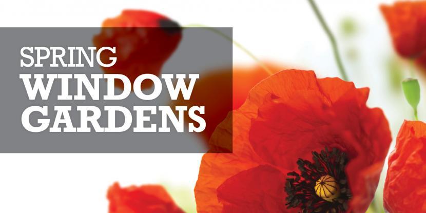 Spring Window Gardens graphic
