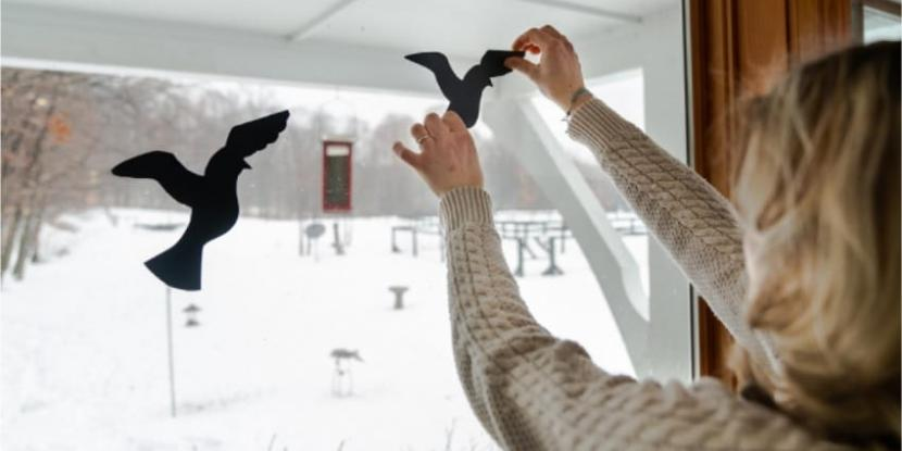 Paper birds being applied to a window